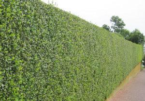 hedge-cutting-maintenance-bankside